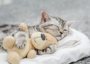 bébé chat doudou
